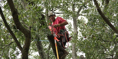 Tennessee Tree Climbing Competition tickets