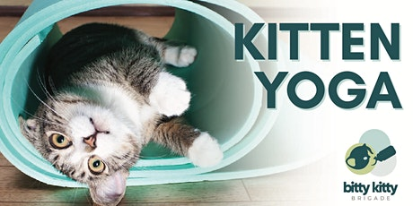 Kitten Yoga with The Bitty Kitty Brigade tickets