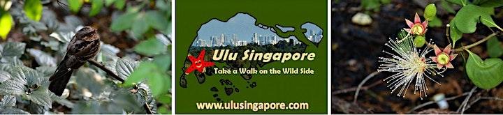 Mysterious Mangroves - Night Walk at Pasir Ris Park image