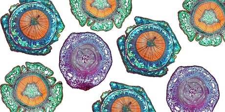 The Artistic World of Histology tickets