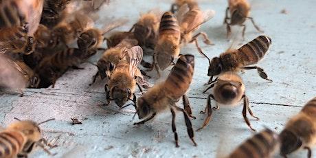 "Dr. Dewey Caron, ""Reading the Hive""  Hosts: Bo Sterk & David Westervelt tickets"