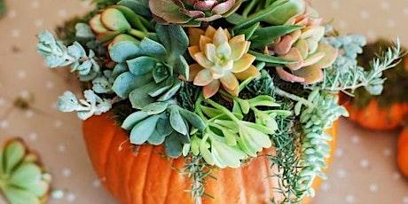 Succulent Pumpkins & Charcuterie Making Class tickets