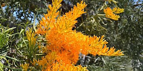 Birak - The beauty of local wildflowers: A series of seasonal talks. tickets