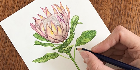 Melville Art Awards:  Botanical Drawing in-situ with Jenessa King tickets