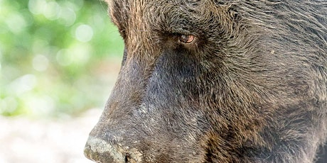 From Bears to Stags – Adventures with my Camera tickets