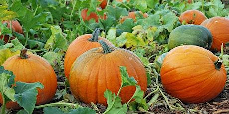 Brookleigh Farm Pumpkins tickets