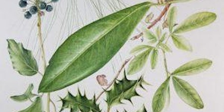 Botanical watercolour painting- Winter berries and flowers tickets