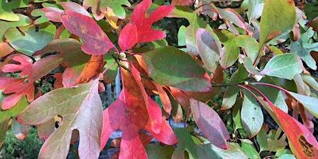 Autumn Tree ID Walk tickets