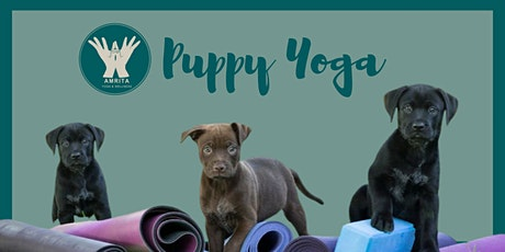 Puppy Yoga with Amrita Yoga and Wellness tickets