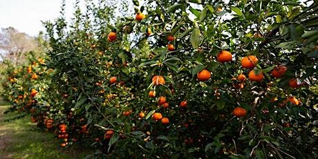 Fabulous Fruit Trees tickets