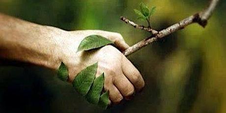 Balade philo. Défis écologiques : faut-il se subordonner à la nature ? billets