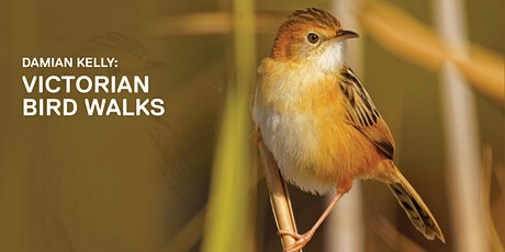 ONLINE - Damian Kelly: Victorian Bird Walks tickets