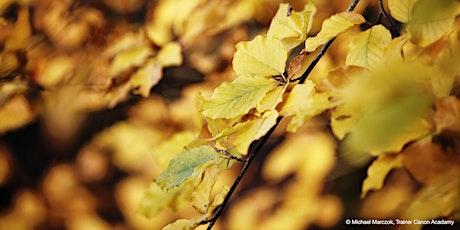 Let's talk: Herbstfotografie - Farbsymphonien, Technik und Motive Tickets