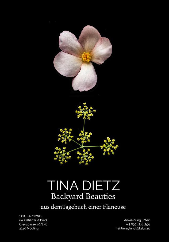 Backyard Beauties - Tina Dietz -  Fotoausstellung: Bild