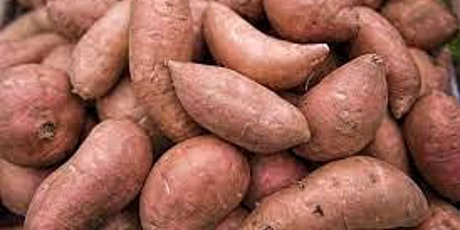 Cook-Along with Books & Cooks: We Root for Sweet Potatoes! tickets