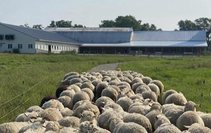 Pasture Walk at Scuttleship Farm image