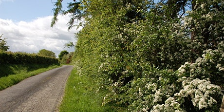 """""""Hedgucation"""" – Irish hedgerows and plant pathology tickets"""