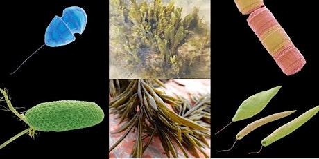 A Festival of Algae tickets