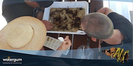 Waterbugs – Currumbin tickets