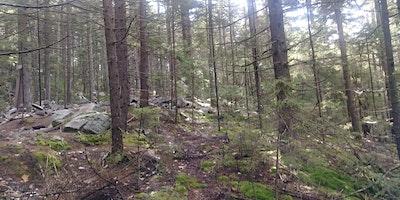 Introduction à l'orientation #3 – Bushwacking sur le Mont-Ouareau