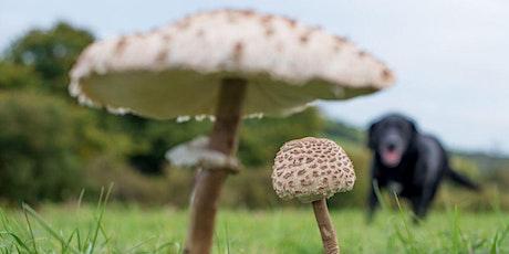 Fungi foray - Coulsdon Common tickets