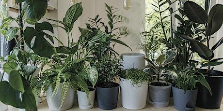 Let's Get Talking | House Plants | Porters Avenue tickets