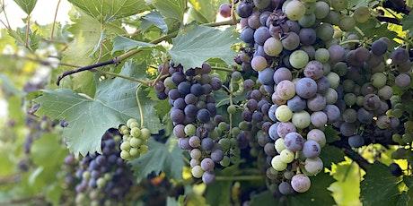 Delfosse Vineyards Wine-Paired Tasting Menu Dinner tickets