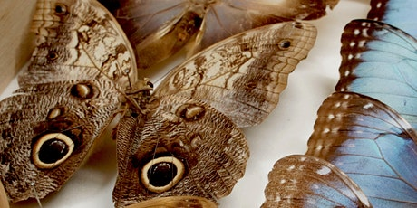 How to professionally pin butterflies and moths. tickets