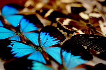Butterfly Brilliance floor talk tickets