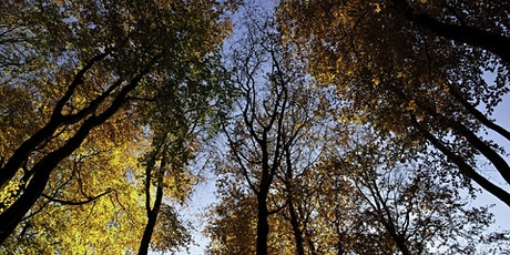 Family Forest School Festival - Create an autumnal wreath tickets
