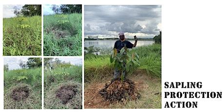 Sapling Protection Action (SPA) at Kranji Coastal Nature Park tickets