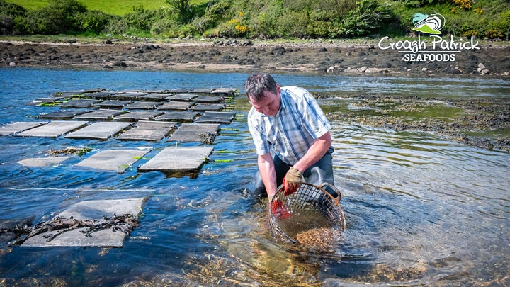 Oyster Farm Experience with Slow Food Mayo image
