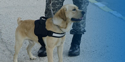A New Leash on Life, The K9 for Warriors Story