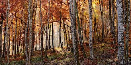 Les arbres en automne. billets