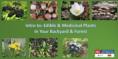 Edibles and Medicinal Plants in Your Backyard and Forest tickets