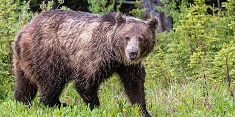 Bears and Bear Safety with Bear Aware tickets