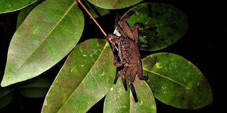 Mysterious Mangroves - Night Walk at Pasir Ris Park tickets