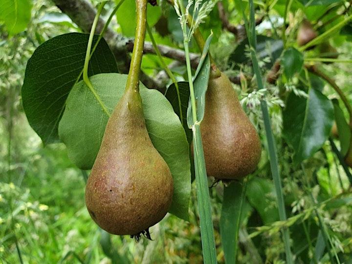 NZ Tree Crop Association Conference image