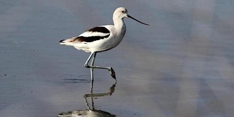 Palo Alto Baylands Nature Preserve, Palo Alto tickets