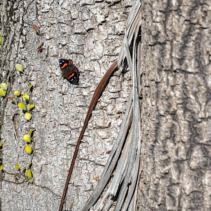 Oasis: A photographic exploration of Ōtari-Wilton's Bush image