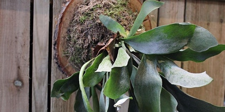 Wall mounted stag horn fern plant workshop tickets