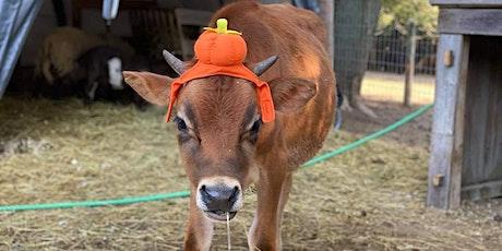Halloween Trick-Or-Treat The Farm! tickets