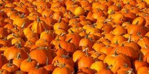 Fork to Fork special edition: #PumpkinRescue
