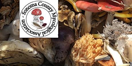 SOMA Wild Mushroom Foray at Salt Point State Park - Nov 20, 2021 tickets