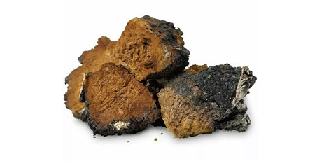 A discussion about Chaga Mushroom - King of the Medicinal Mushroom tickets
