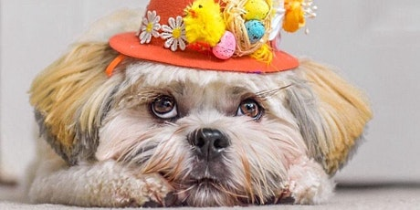 Cliftonville Dog Show - Easter edition tickets