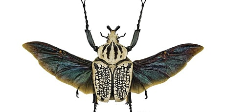 Goliath Beetle Pinning tickets
