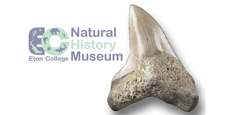 Eton College Collections ECCE Workshops at the Natural History Museum tickets