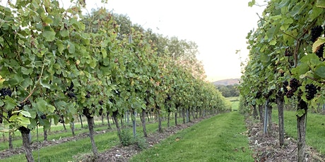 Sugrue South Downs- Mount Harry Picking Pinot Noir/Pinot Meunier tickets