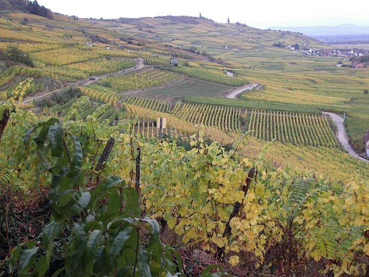 Image pour Verkostung von elsässischen Wein / Dégustation de vins alsaciens